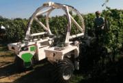 Vinitech-Sifel: Un carrefour d'innovations