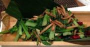 Mutatec signe un contrat avec l'IRD pour accélérer sa production d'insectes