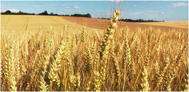 Soufflet Agriculture inaugure un nouveau silo en Vendée