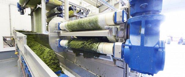 Macro-algues: La France, leader européen dans les bioraffineries