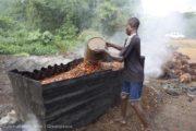 L'huile de palme bientôt remplacée par Substipalm?