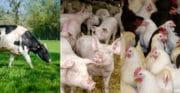 Première pierre du Laboratoire d'Innovation Territorial « Ouest territoires d'élevage »