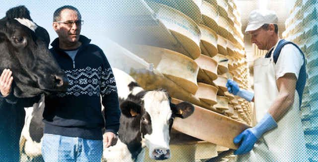 Les coopératives laitières mettent en avant leurs atouts!
