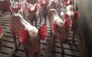 Casino: Un projet d'étiquetage sur le bien-être animal