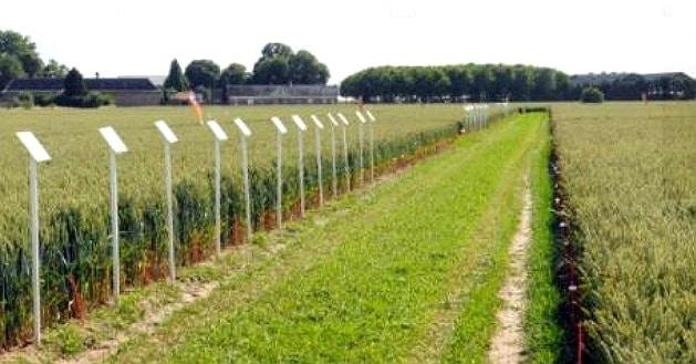Syngenta investit dans le développement des hybrides de céréales et de colza