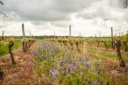 0% Pesticides : Les Vignerons de Buzet obtiennent la reconnaissance de Vins et Santé