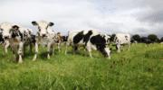 Terrena se dote de la première force de vente transversale de produits carnés en France