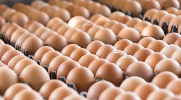 Fipronil: les premières mesures du gouvernement et des professionnels de l'agroalimentaire
