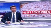 Fipronil et produits transformés à base d'œufs : Etat des lieux de l'AFSCA
