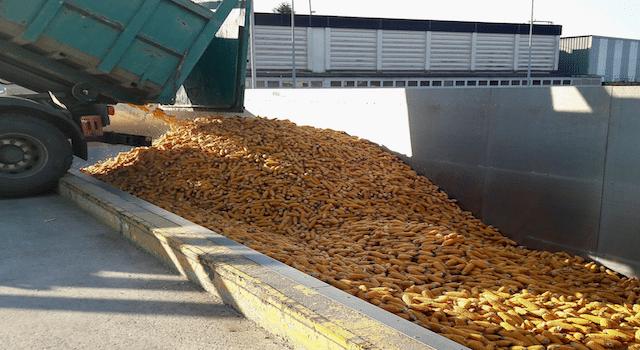 Euralis garantit traçabilité et qualité totale sur la production de semences