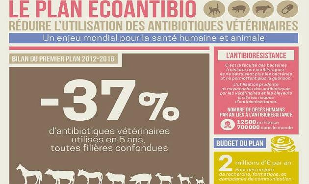 Plan Écoantibio: baisse de 37% de l'exposition des animaux aux antibiotiques