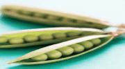 [2017]Food Ingredients Europe: Trivallat Noyal présente sa gamme d'ingrédients naturels pour vos formulations alimentaires et santé