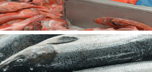 Intermarché et Agromousquetaires demandent un moratoire sur la pêche électrique