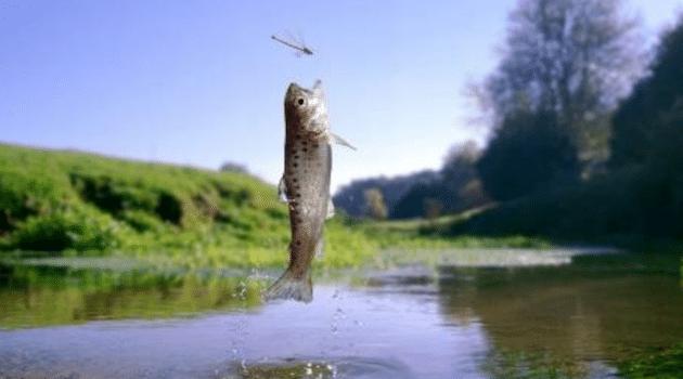 Aquaculture : Innovafeed lève 15 millions d'euros pour un système d'élevage d'insectes