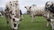Le gouvernement renforce sa stratégie en matière de bien-être animal