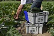 Marc Montluçon, pdg de FRDP : «La bio possède d'autres valeurs que le sans pesticides»