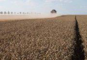 Agroécologie : L'Europe vote l'interdiction de trois néonicotinoïdes