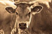 Innovations : Trois start-up engagées dans l'alimentation durable récompensées