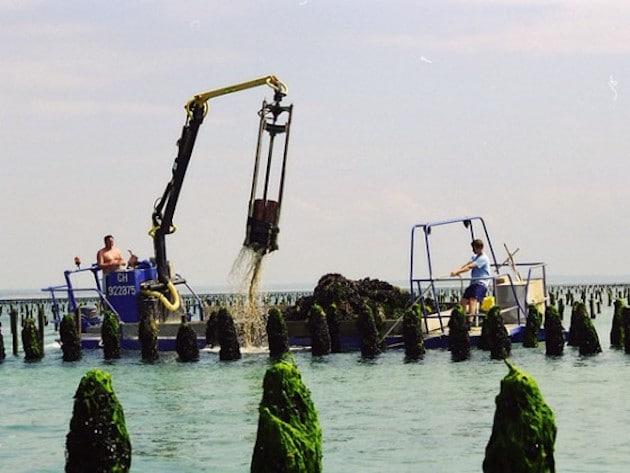 Produits de la mer : Méricq et Kermarée se rapprochent
