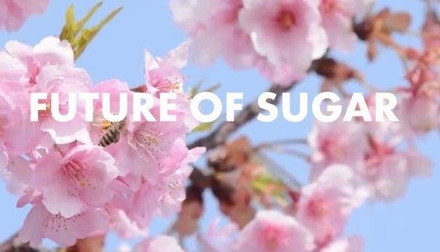 Marché du sucre et innovations : La société indienne Petiva veut développer une nouvelle génération de sucre