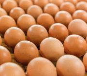 Œufs : Comment la filière entend relancer le marché et poursuivre sa mutation