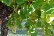 Laudun Chusclan Vignerons inaugure son nouveau chai de vinification 2.0