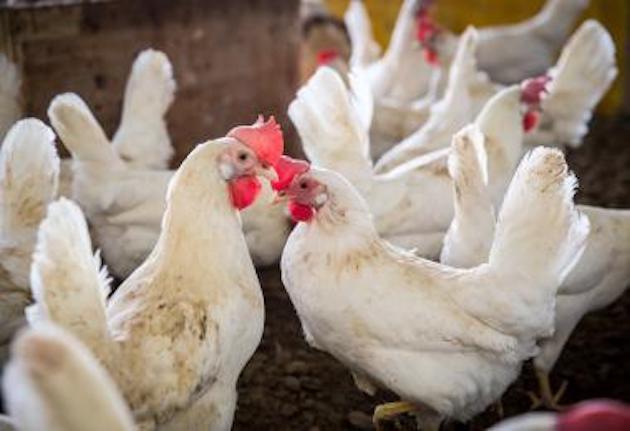 Alimentation animale : fenaco réorganise ses productions