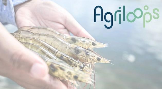 Agriloops lève 1,4 M€ pour construire la première ferme pilote d'aquaponie en eau salée d'Europe