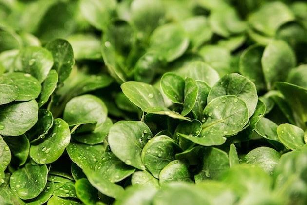 Agrial renforce l'activité européenne de sa branche Légumes et Fruits frais