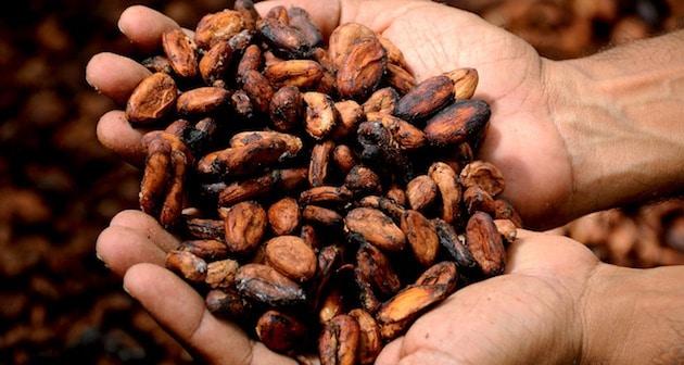 Mars ambitionne une chaîne d'approvisionnement de cacao sans déforestation d'ici 2025