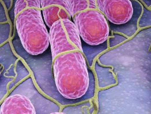 Un foyer épidémique de Salmonella Poona lié à des préparations pour nourrissons