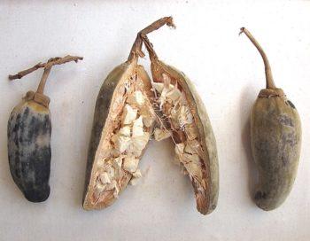 Maqui, asperge et baobab : Les nouvelles tendances d'ingrédients fonctionnels