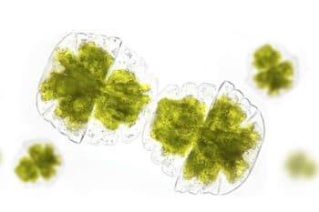 Innovation : Fermentalg expérimente ses micro-algues pour purifier la qualité de l'air