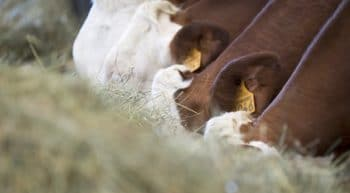 Abattoirs : Pérennisation du CNEAb