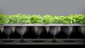 Les salades intelligentes conçues par Combagroup arrivent sur les étals français