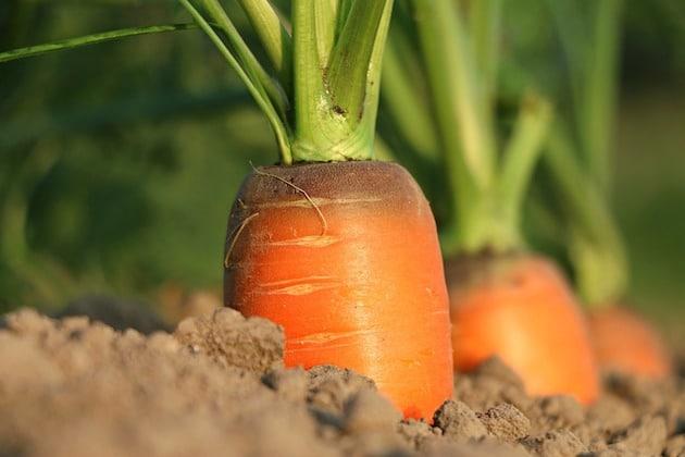 Agromousquetaires et Agrocampus Ouest veulent transformer la filière alimentaire
