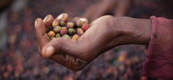 Starbucks dote son usine de six nouveaux torréfacteurs de grains entiers