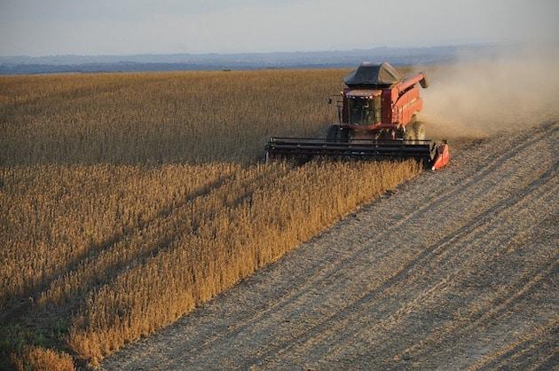 L'industrie agroalimentaire menacée par l'addiction de l'Europe au soja ?