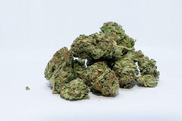 Le cannabis fait son entrée au Process Expo