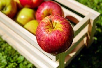 Un guide à destination des acteurs de l'agroalimentaire pour s'adapter au changement climatique