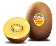 Zespri s'attend à récolter environ 19 millions de plateaux soit près de 70 000 tonnes de kiwis
