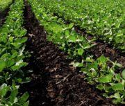 Tyson Foods lance une coalition pour faire avancer l'avenir des protéines durables