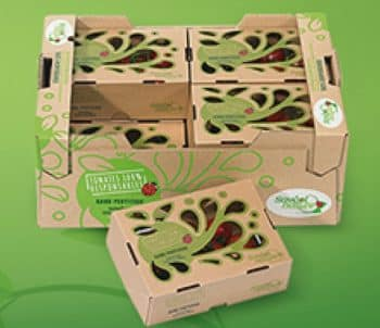 Savéol et Smurfit Kappa développentun emballage de tomates 100% carton