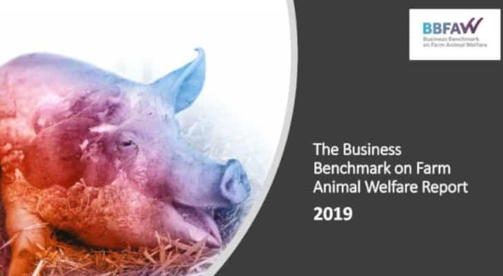 Les entreprises françaises agroalimentaires progressent sur le bien-être animal