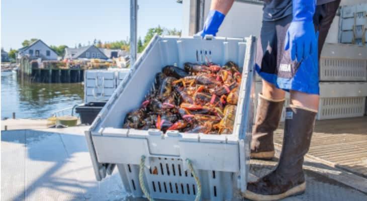 Covid-19 : La filière pêche propose une plateforme pour les approvisionnements