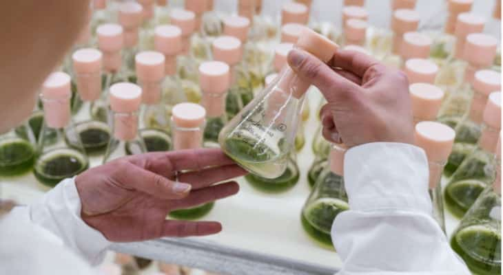 L'alimentaire, le nouveau positionnement de marque de la start-up foodtech Algama