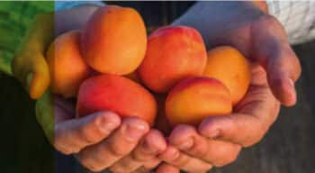 Après Covid-19 : Interfel présente son plan d'action de relance de la filière fruits et légumes