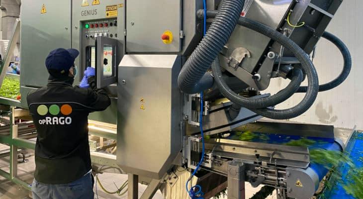 Rago, 2e exportateur européen de salades en sachets adopte les équipements de tri de Tomra