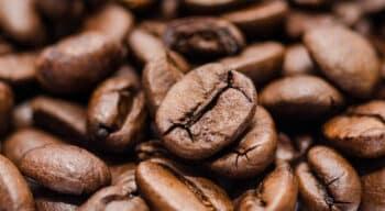 «Qualité du café» : De la culture aux procédés, un livre pour tout savoir