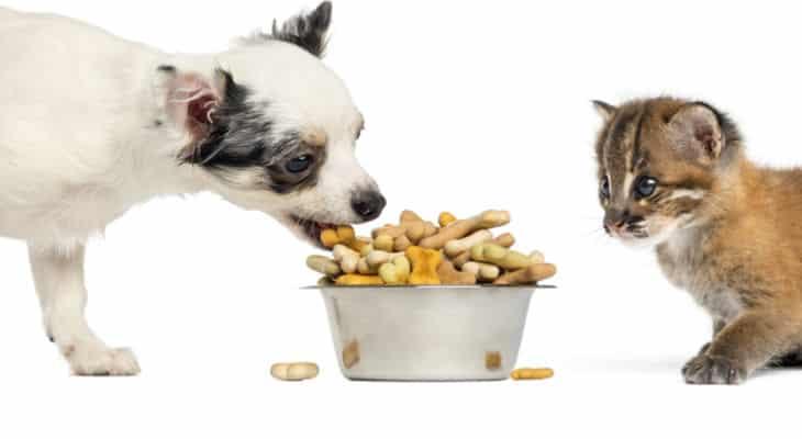 Le marché du petfood en pleine tourmente